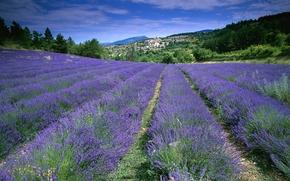 прованс,  франция,  поле,  лаванда,  цветы