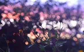 Flores, pr do sol, cu, cor, humor, outono