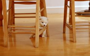situazione, animali, cane, cagnetto, sedie, sedia, albero, di legno, lanuginoso, bianco