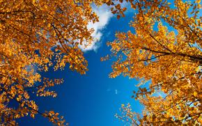 природа,  золотая осень,  ветки,  листва,  небо
