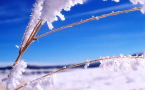 neve, ghiaccio, ramo, inverno