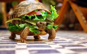 mood, turtle, food