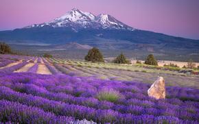 природа,  пейзаж,  горы,  поле,  цветы,  лаванда