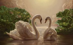 Swans, evening, two, романтика, picture