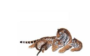 тигрица, малыши, тигрята, мама, забота. ласка, любовь