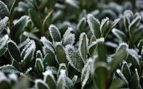 grass, snow, rime