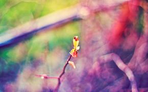 Naturaleza, ramita, folleto, color, Macro