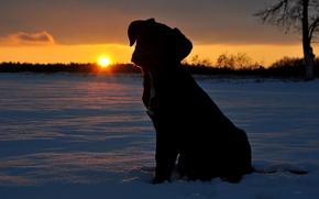 小狗, 雪, 日落, 太阳