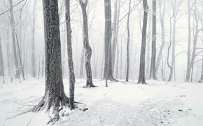 bosque, nieve, troncos