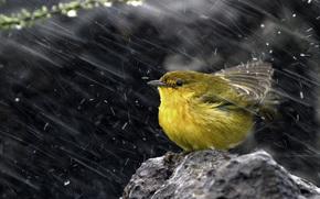 желтая древесница,  птица,  камень,  снег