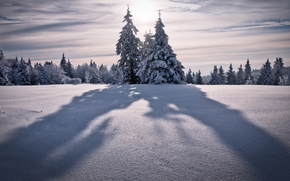 winter landscapes, nature, Winter, winter wallpaper, tree, Trees, spruce, ate, Tree, Trees, snow, snowfall, mountain, Mountains, top, vertices, wind, sky, height, Winter Nature, sun, shadow, shadow