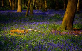 лес, трава, цветы