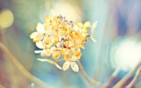 planta, Macro, color, Naturaleza