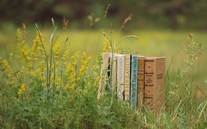 Books, meadow, grass, greens, Plants, summer, nature, reading, mood