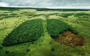 лес,  экология,  деревья,  природа,  пейзаж,  лёгкие,  река,  срубка леса,  всемирный,  фонд,  дикой,  природы,  обои