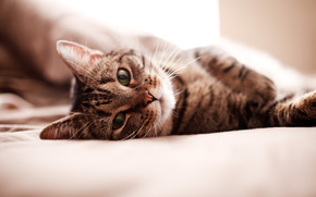 gatto, gatto, gattino, letto, LETTO, Kote, grugno, carta da parati