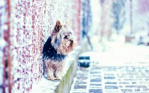 perro, nieve, calle, pared, casa