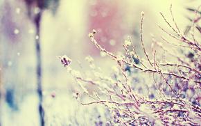 Naturaleza, rama, nieve, invierno