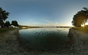Lake, утки, Machines, Trees