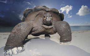 tartaruga, spiaggia, cielo, sabbia, conchiglia