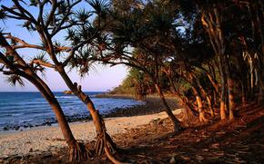 树, 海, 海滩, 石头, 根