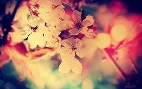 Цветы,  Колор,  Белый,  Красный