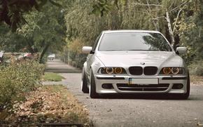 bmw, BMW, gray, road, forest, cars, machinery, Car