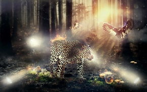 leopardo, fauna, e Flora
