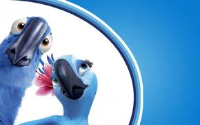 cartone animato, Rio, rio de janeiro, Pappagalli, Uccelli, blu, ara, perla, miele, coppia, becco, sorpresa, vista, fiore, blu, sfondo