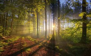 性质, 森林, 秋天, 光