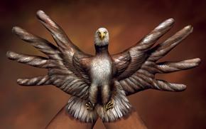 орёл,  птица,  ручной,  креатив,  итальянский,  художник,  гвидо даниэле,  пальцы,  рука,  обои