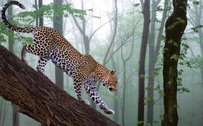 ramo, foresta, Photoshop