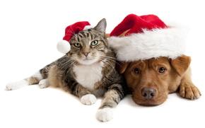 кот,  пес,  в шапках,  дружба,  праздник