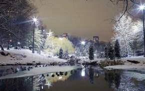 Ciudad, parque, Los rboles, invierno, nieve, las tasas de, luces
