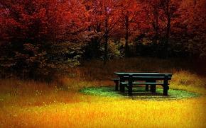 banco, hierba, bosque, Color, otoo