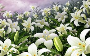 сад, лилии, цветы, почки