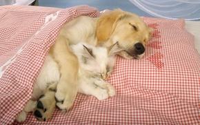 пес, кот, дружба