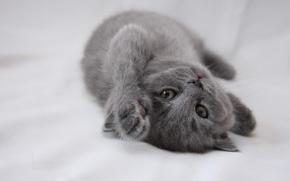 gattino, grugno, bambino