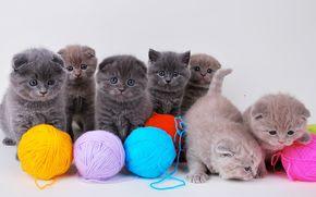 котята, нитки, клубок