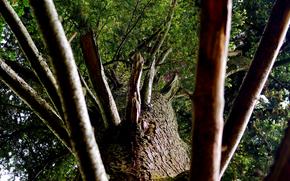 albero, ramo, tronco, corteccia