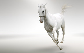 fondo, Color blanco, caballo, melena, cola, golop