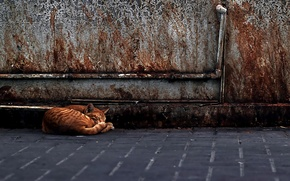 Homeless, red, cat