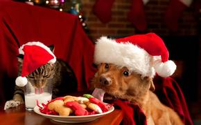 новый год, собака, кот, молоко, Новый год