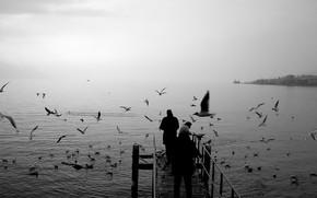 Gulls, pier, black and white