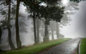 Nature, aleykii, Humide, matin, parc, brouillard