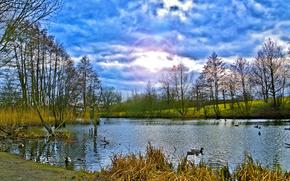 утки, озеро, небо