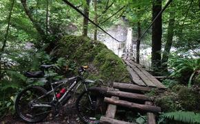 bicycle, nature, bridge
