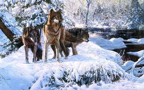 Lupi, inverno, neve, animali, tre