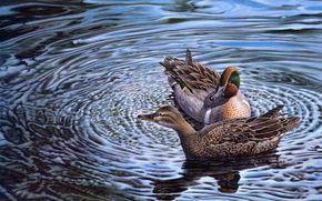 harold roe, Ducks, couple, water, Art
