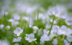 natura, primavera, fiori